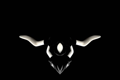 The Taurus